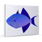 Niger Triggerfish 20x24 Canvas Print