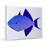 Niger Triggerfish 16x20 Canvas Print