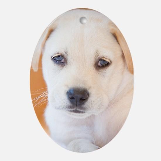 Labrador Puppy Dog Ornament (Oval)