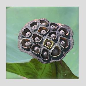 Seed Pod Tile Coaster