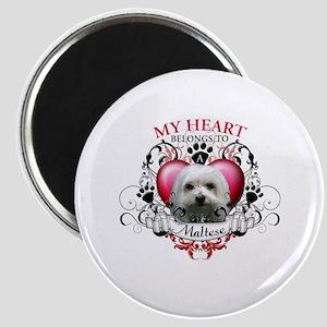 My Heart Belongs to a Maltese Magnet