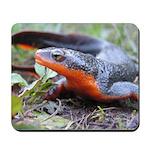 California Newt Salamander Mousepad
