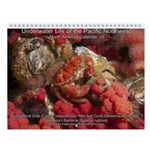 North Pacific Ocean Life 2013 Wall Calendar v5