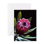 Pink Protea Greeting Card