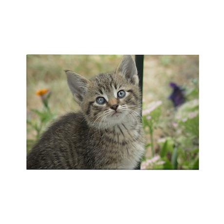 Kitten Rectangle Magnet (10 pack)