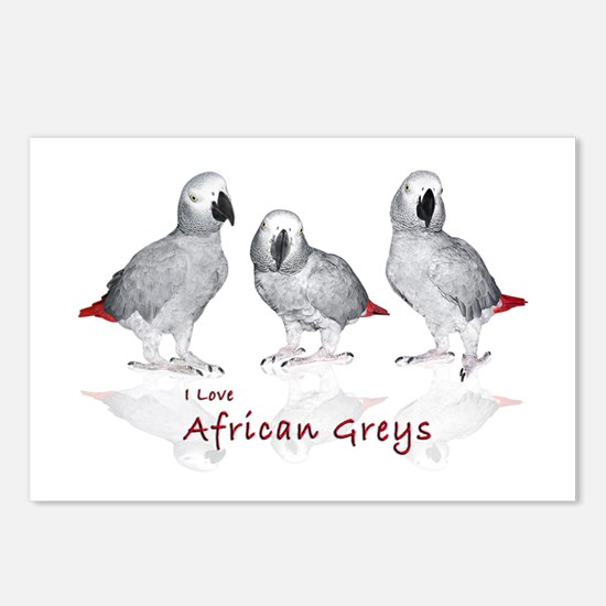 african grey parrots Postcards (Package of 8)