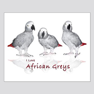 african grey parrots Small Poster