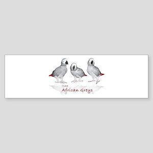 african grey parrots Sticker (Bumper)