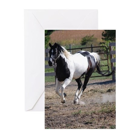 Horse/Pinto Black & White Greeting Cards (Pk of 20