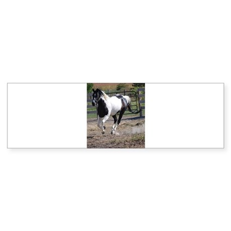 Horse/Pinto Black & White Sticker (Bumper)