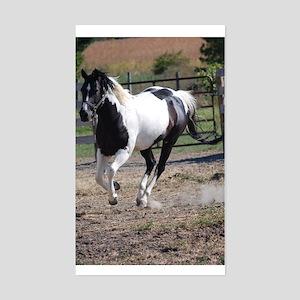Horse/Pinto Black & White Sticker (Rectangle)