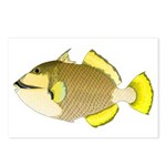 Titan triggerfish Postcards (Package of 8)