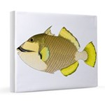 Titan triggerfish 20x24 Canvas Print
