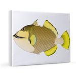 Titan triggerfish 11x14 Canvas Print