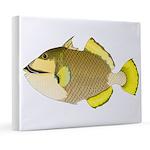 Titan triggerfish 8x10 Canvas Print