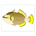 Titan triggerfish Posters