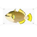 Titan triggerfish Banner