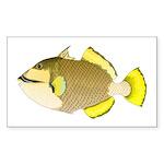 Titan triggerfish Sticker