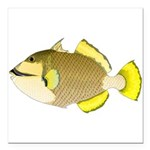 Titan triggerfish Square Car Magnet 3