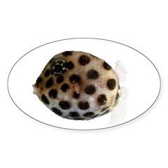 Ostraciidae Fish Sticker (Oval)