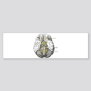 Brain Sticker (Bumper)