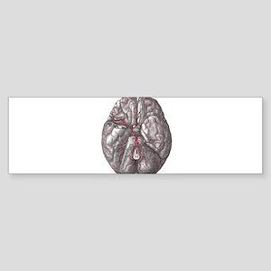 Gray's Anatomy Brain Sticker (Bumper)