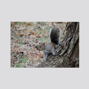 Curious Squirrell Rectangle Magnet