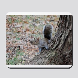 Curious Squirrell Mousepad