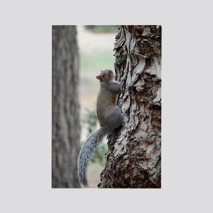 Climbing Squirrell Rectangle Magnet
