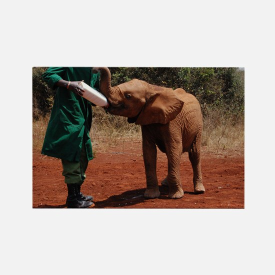 Baby Elephant Rectangle Magnet
