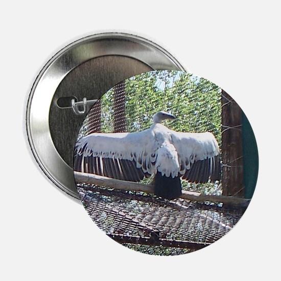 """cape griffon vulture 2.25"""" Button"""