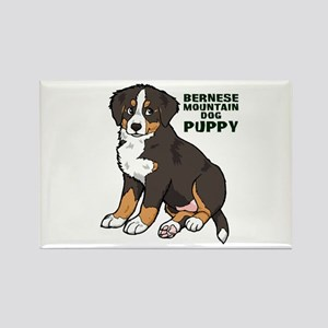 Sitting Bernese Mountain Dog Rectangle Magnet