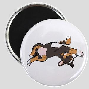 Sleeping Bernese Mountain Dog Magnet
