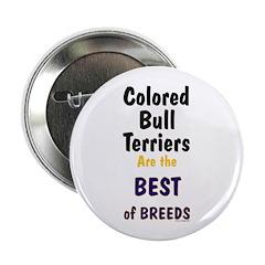 Colored Bull Terrier Best 2.25