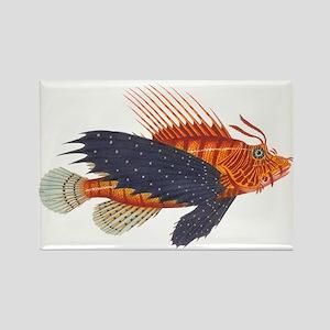 Lionfish, Genus Pterois Rectangle Magnet
