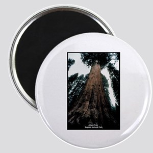Sequoia National Park Tree Magnet