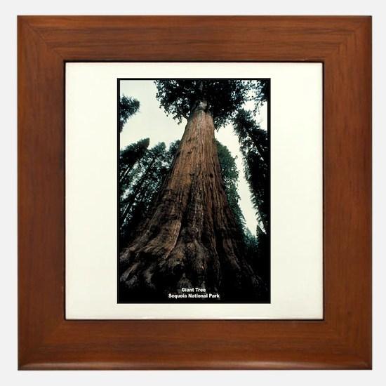 Sequoia National Park Tree Framed Tile