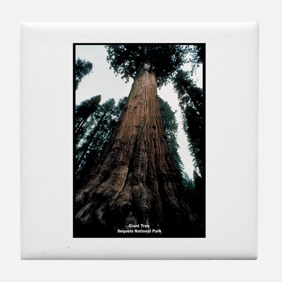 Sequoia National Park Tree Tile Coaster