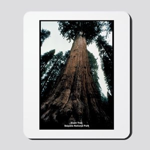 Sequoia National Park Tree Mousepad