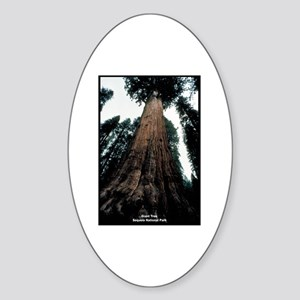Sequoia National Park Tree Oval Sticker