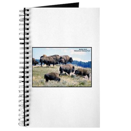 Yellowstone Buffalo Herd Journal