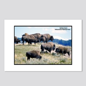 Yellowstone Buffalo Herd Postcards (Package of 8)