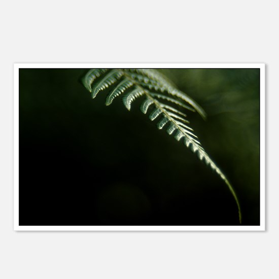 Fern Postcards (Package of 8)