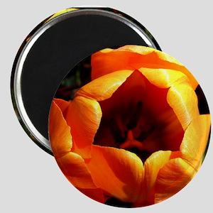 Inside Orange Magnet