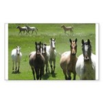 Appaloosa Sticker (Rectangle 10 pk)