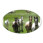Appaloosa Sticker (Oval 10 pk)