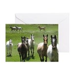 Appaloosa Greeting Card