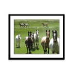 Appaloosa Framed Panel Print