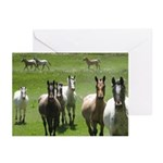 Appaloosa Greeting Cards (Pk of 10)