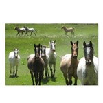 Appaloosa Postcards (Package of 8)